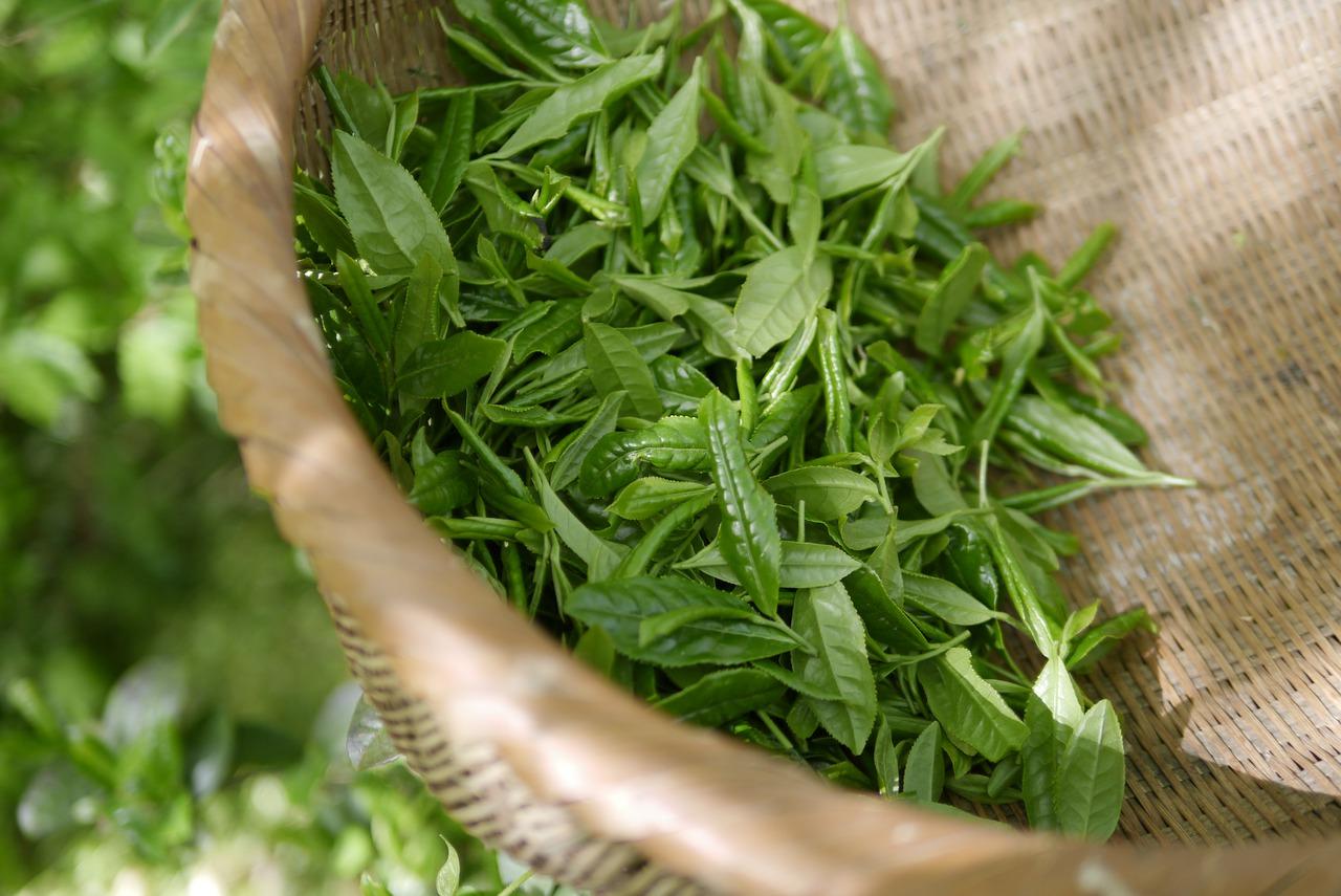green tea 5301025 1280