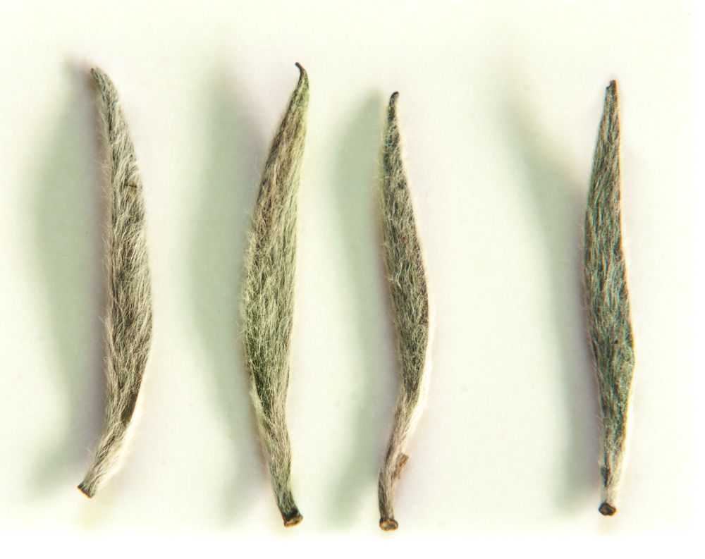 Picture of Silver Needle tea