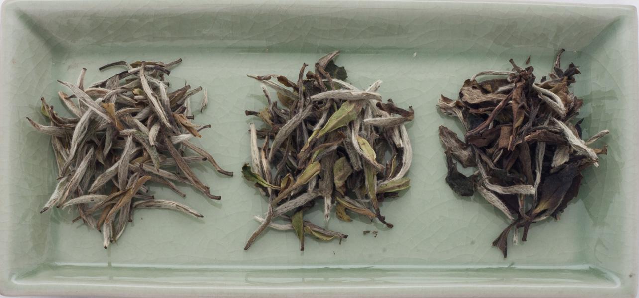 white teas hq 1