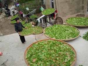 Tee in Bambuströgen