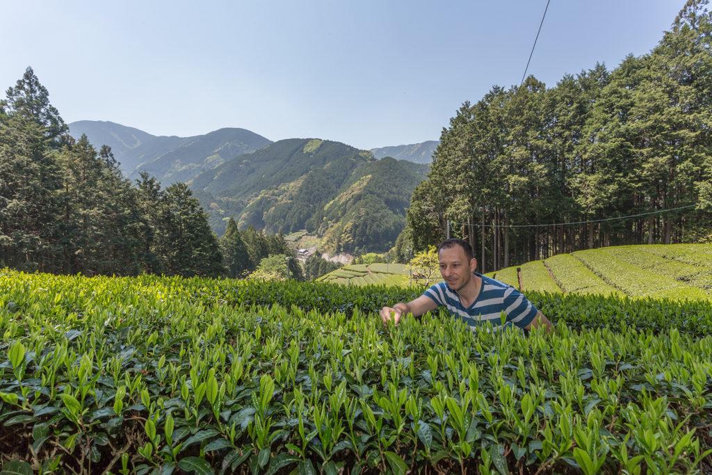 Honyama Tee aus der Nähe betrachtet