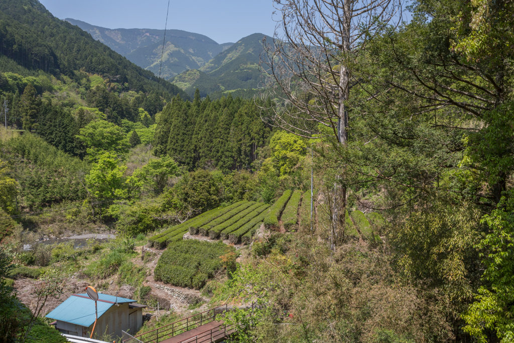 Honyama tea fields with Abe River in the background