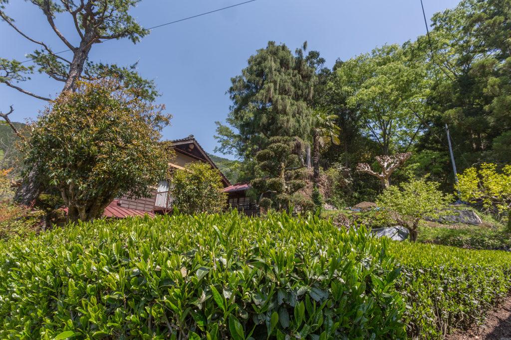 Tea master's house