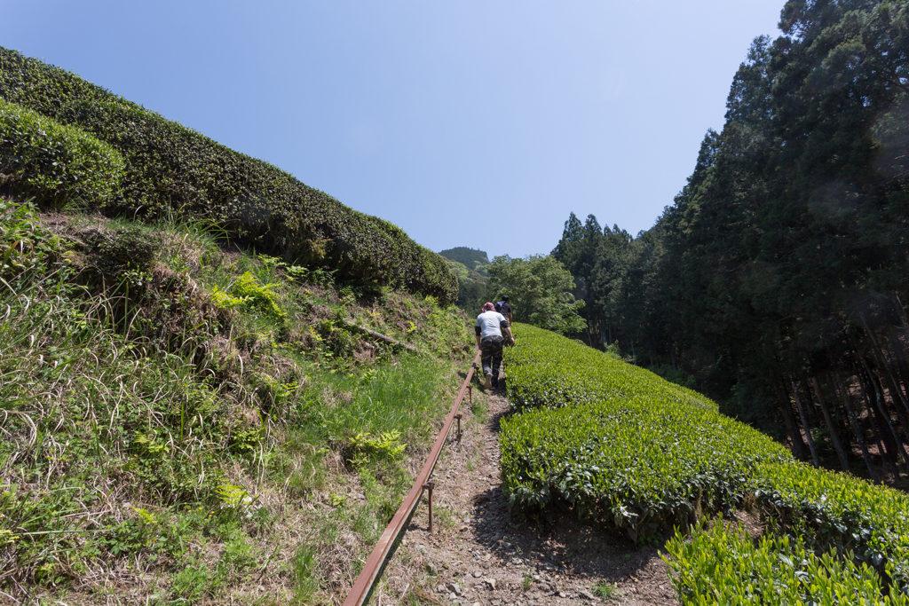 Aufstieg zu den Teegärten von Honyama