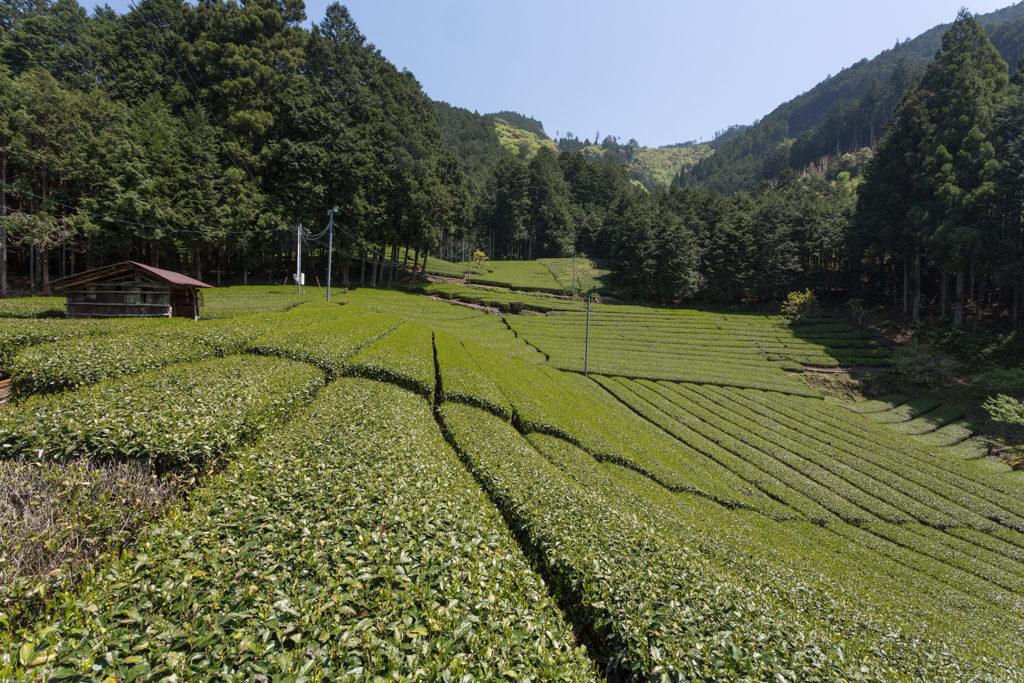 Honyama Tee