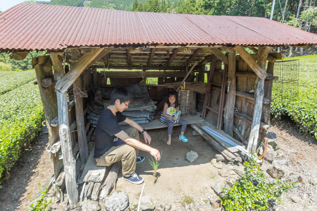 Honyama Teefeld mit Hütte