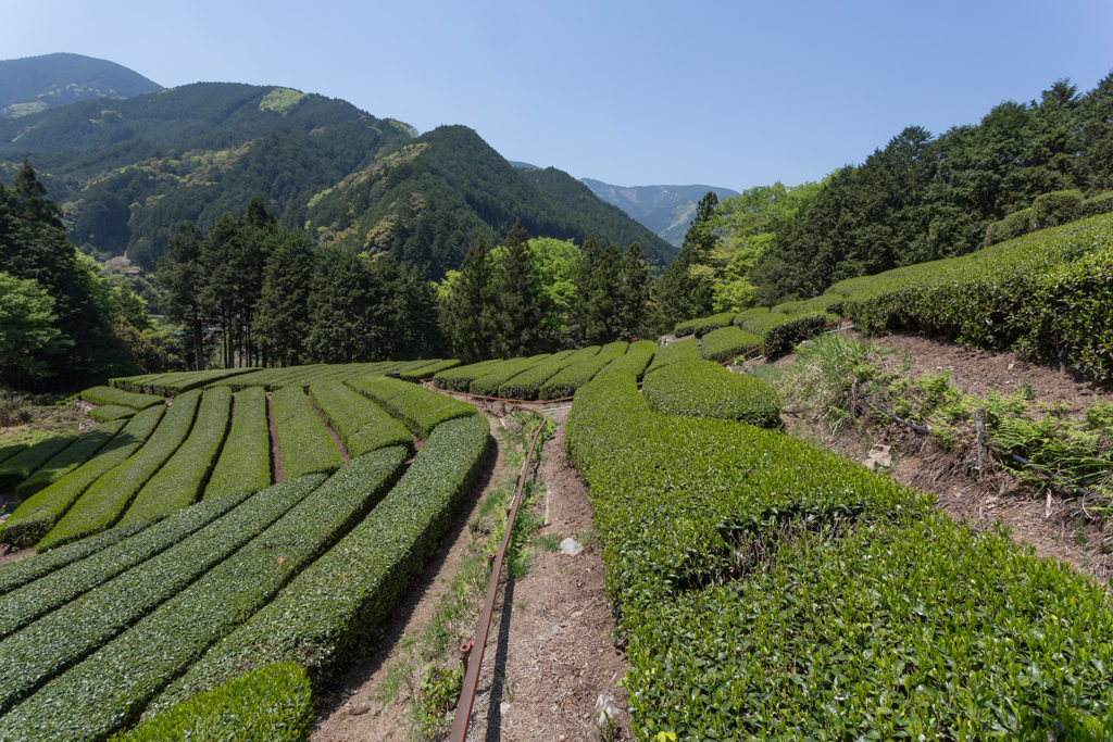 Honyama Teegarten
